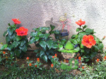 Flowerw