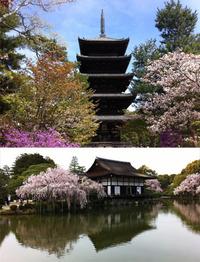 Kyotos