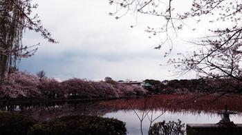 Ueno1446_2