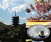 Kyoto1404c
