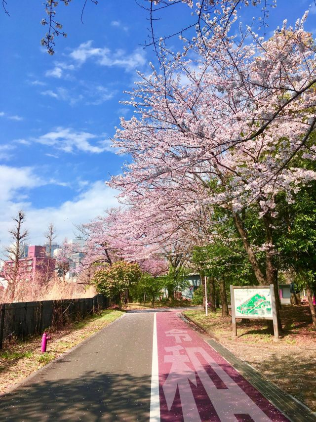 Sakurareiwa