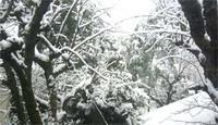 snow060121