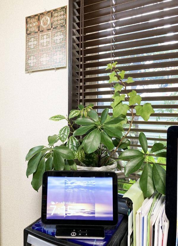Plant_20210410075001