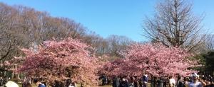 Sakura200223a_20200224071101