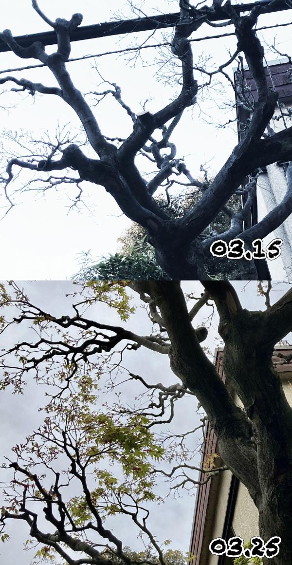Tree2021_20210326085501